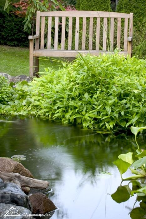 Serene clipart pond plant And images Features best Water