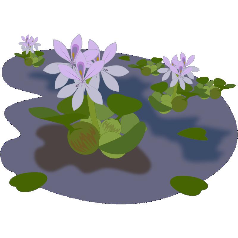 Serene clipart pond plant Clip Free Pond & Use