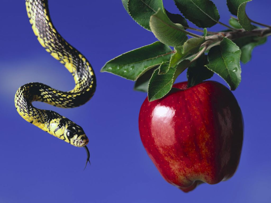 Serpent clipart apple Image  Snake Free Images