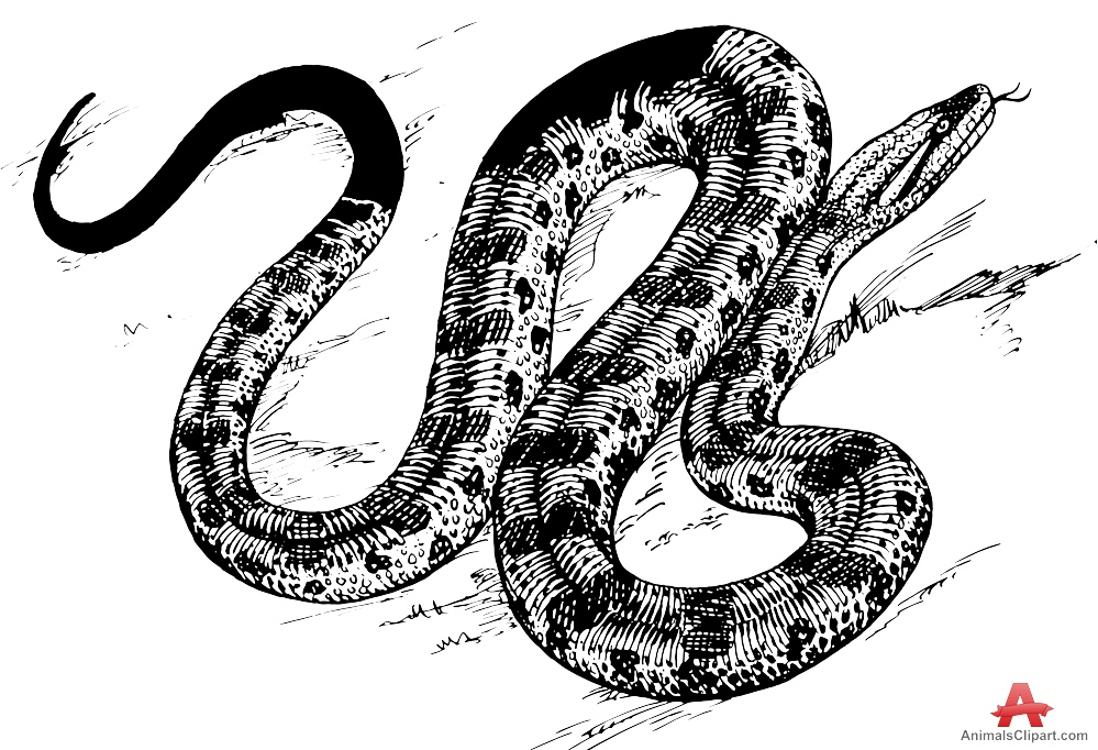 Serpent clipart drawn Art Cliparting of Drawing image