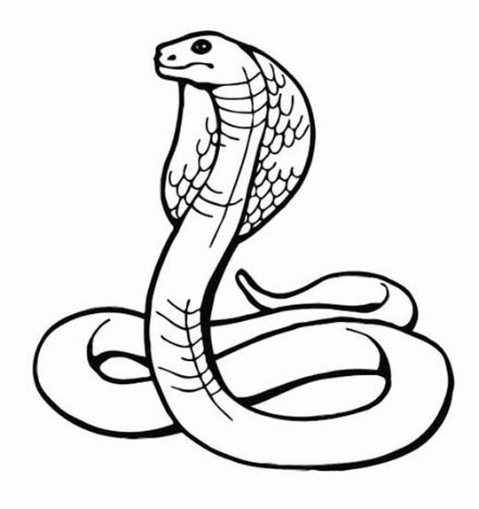 Drawn snake egyptian cobra Is Lower The the The