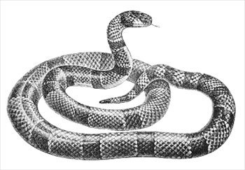 Realistic clipart snake #12