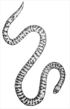 Serpent clipart halloween Clipart Free snake Free and