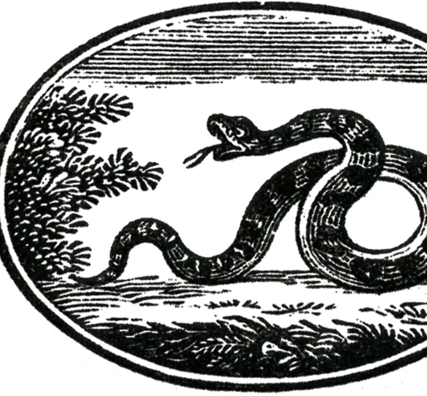 Serpent clipart halloween Graphics Snake Halloween The Label