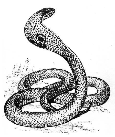 Reptile clipart cobra #4