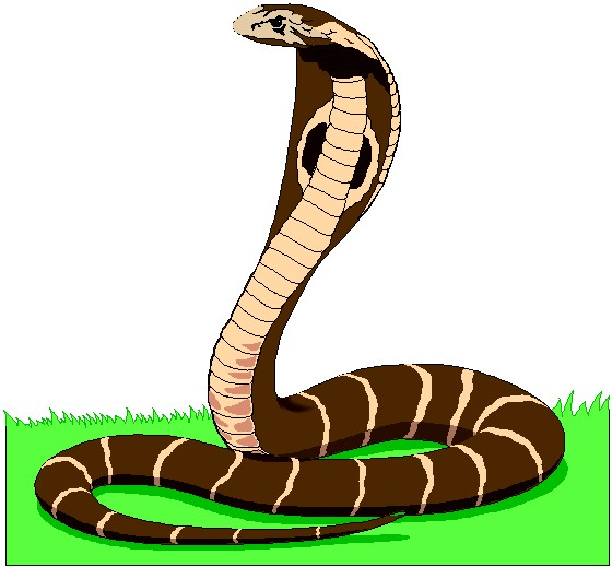 Serpent clipart kobra Welcome to com!!!animals 56 55