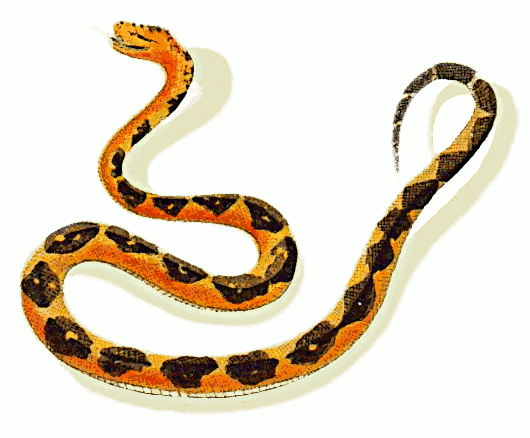 Realistic clipart snake #3