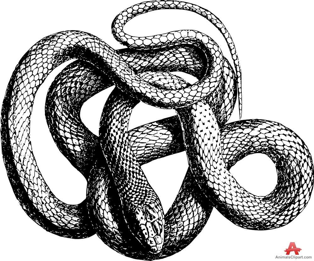 Garter Snake clipart drawn Clipart Snake download clipart drawing