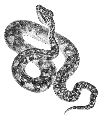 Realistic clipart snake #6