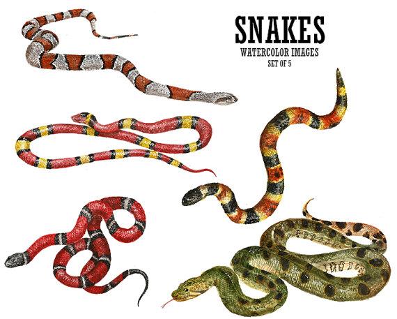 Reptile clipart boa #8