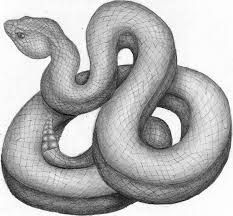 Serpent clipart sketched Free result drawing Open