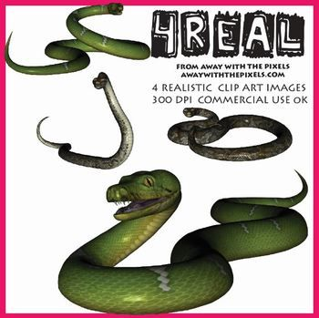 Serpent clipart teacher Quality  Realistic Snake Images