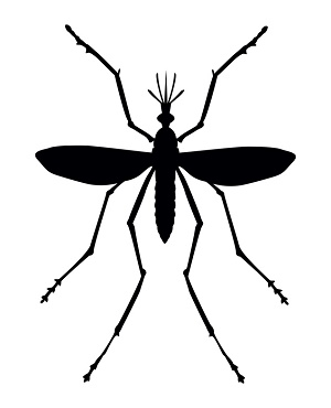 Shadow clipart mosquito #12