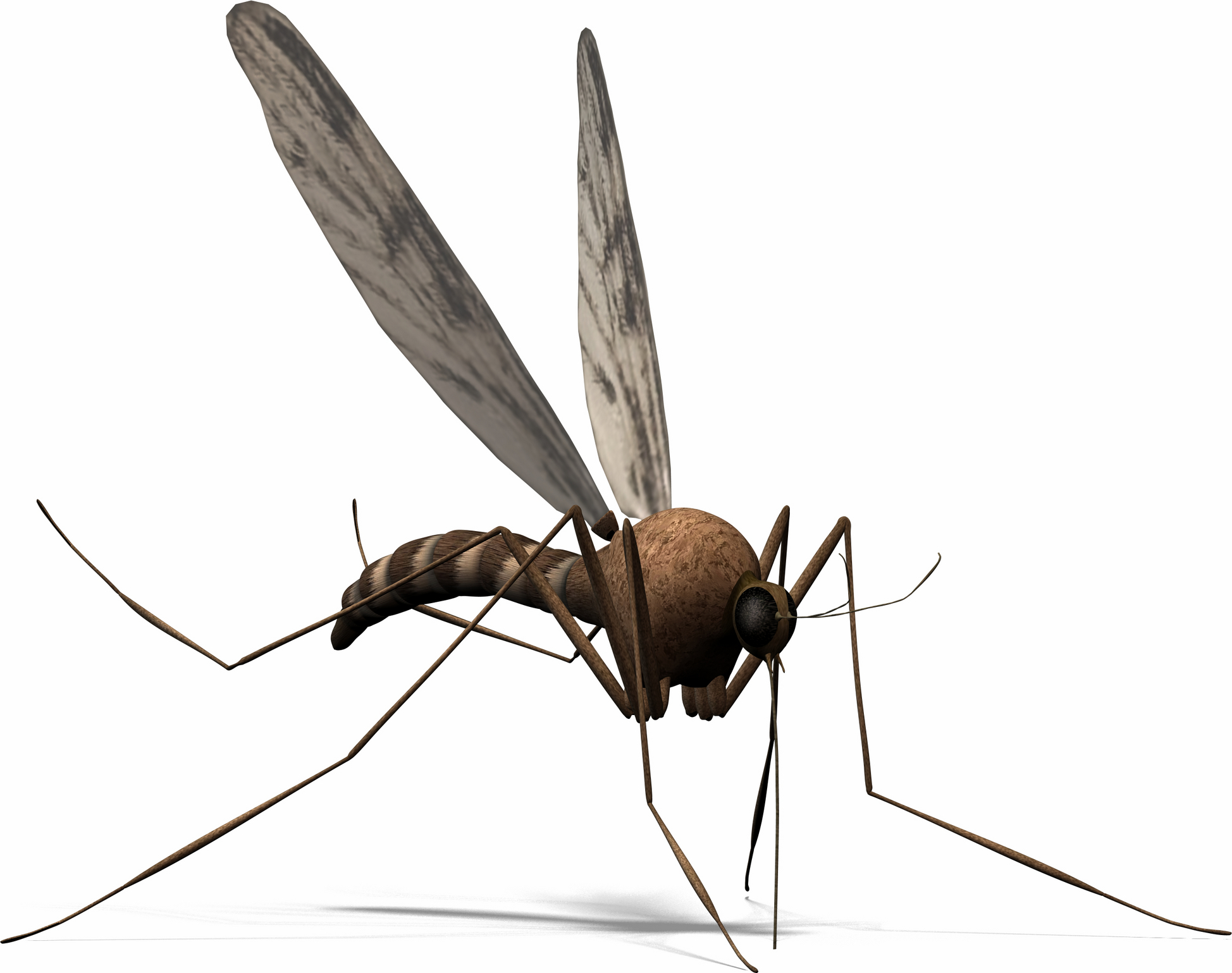 Shadow clipart mosquito #13