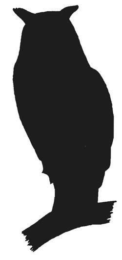 Night clipart gray owl Ideas Best Pinterest Owl Owl