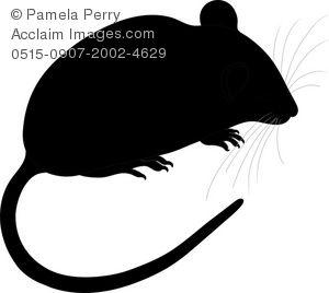 Rat clipart european #1