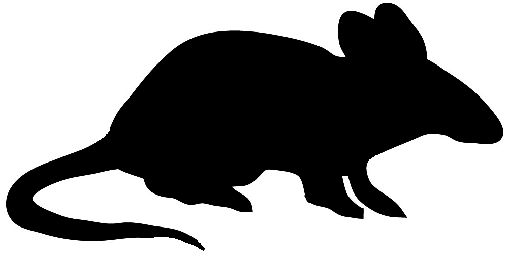 Tiger clipart shadow #3