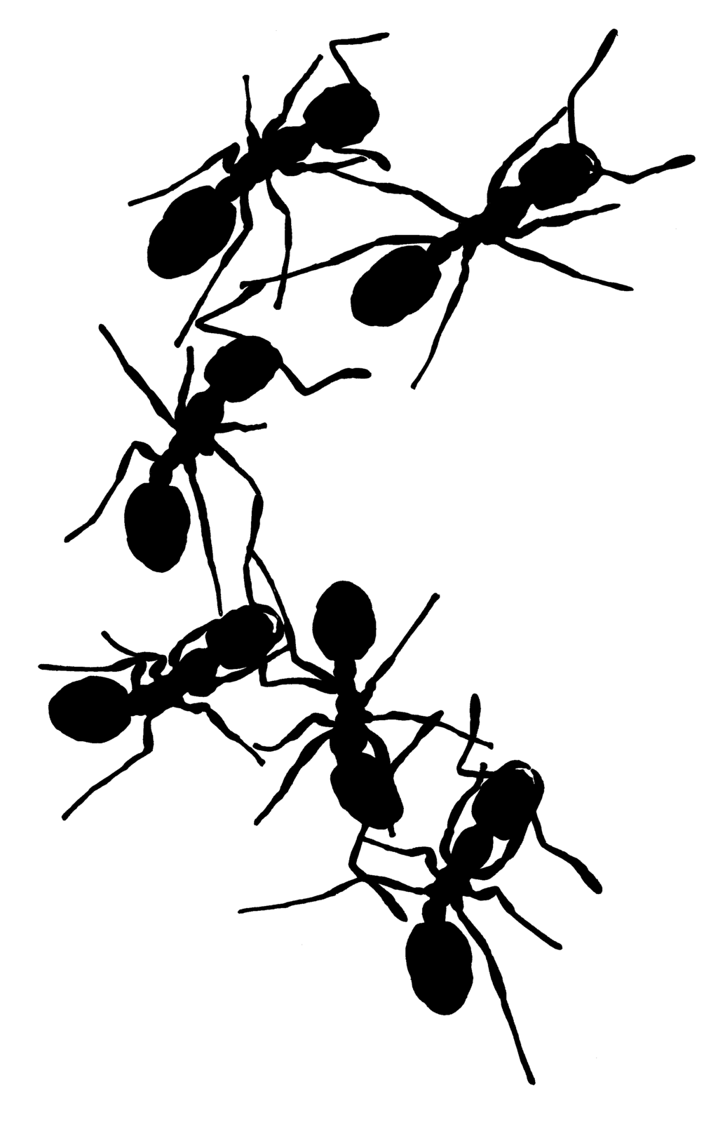 Shaow clipart ant Ant Ant Silhouette photo#22 silhouette