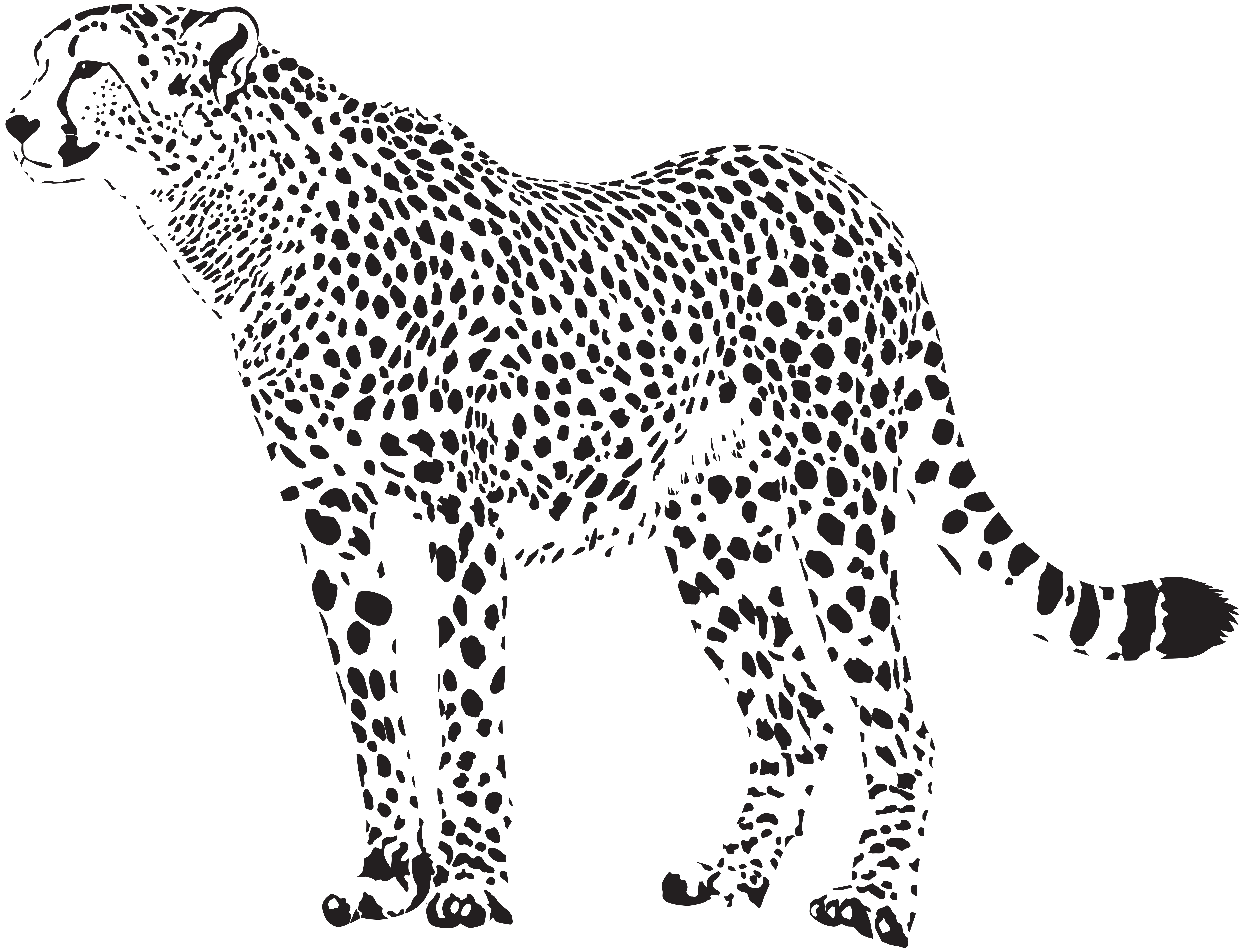 Shaow clipart cheetah Free image silhouette Clipart Pictures