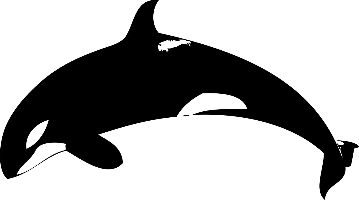 Blue Whale clipart stencil Panda Images Clipart Orca Art