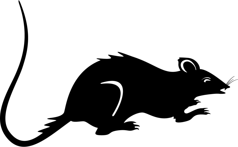 Realistic clipart rat #4
