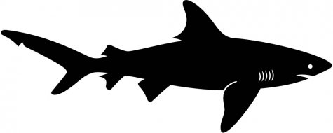 Shaow clipart shark Australiana Search Search silhouette