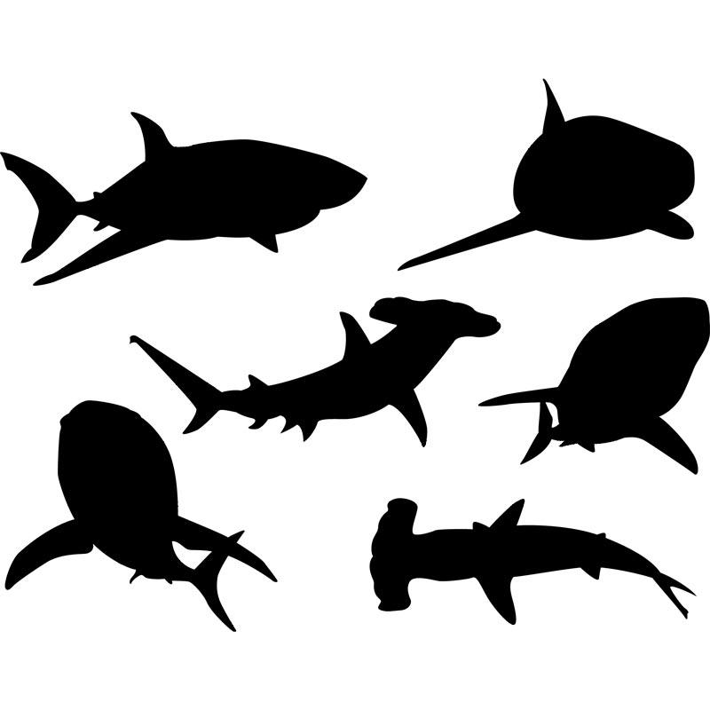 Shaow clipart shark Clip free Download  Shark