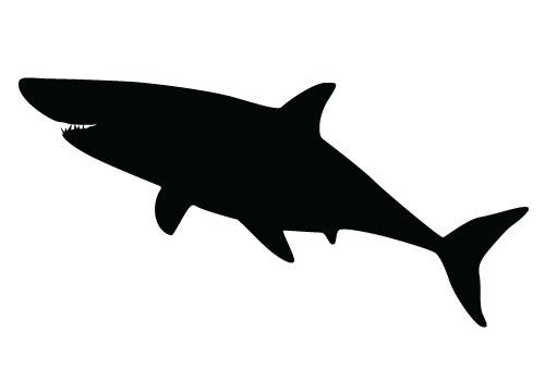 Shaow clipart shark Clip Shark Free Download Art