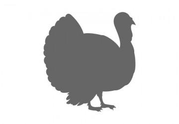 Turkey clipart shape #3