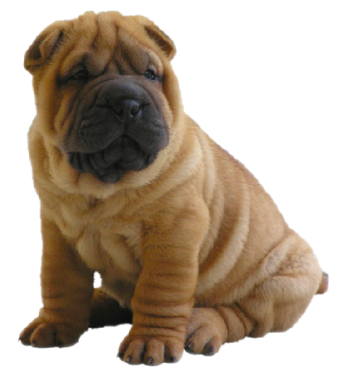 Shar Pei clipart Download Clipart free for Clipart