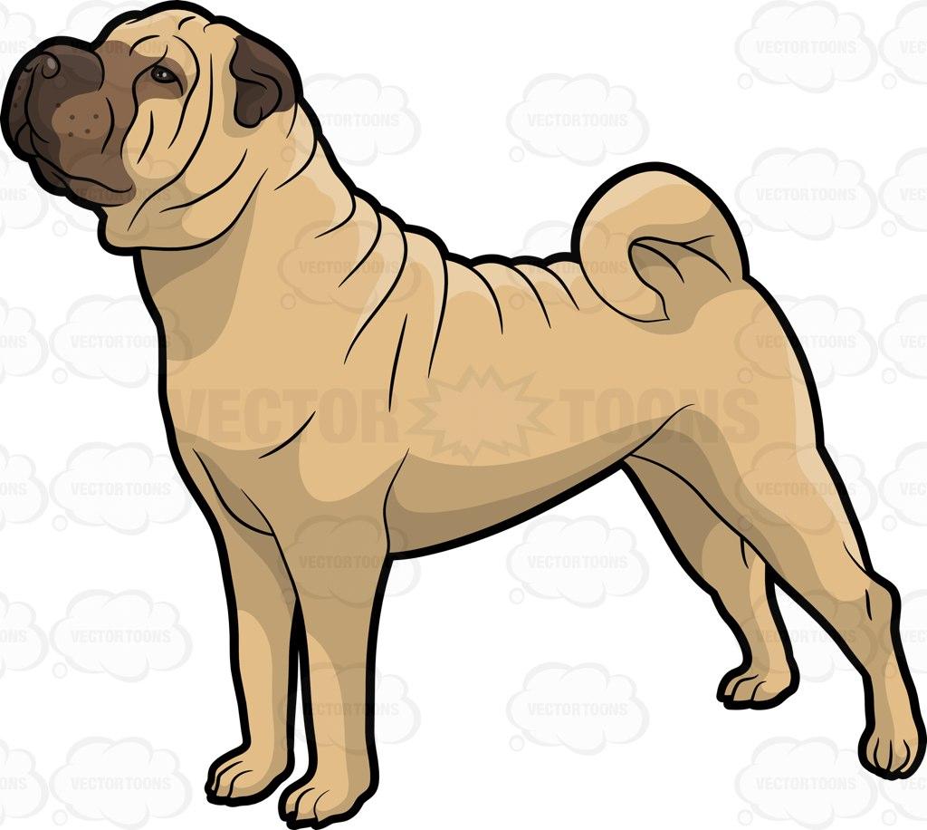 Shar Pei clipart Shar Cartoon Looking Cute Dog