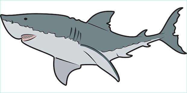 Shark clipart Cliparting art cliparts images free