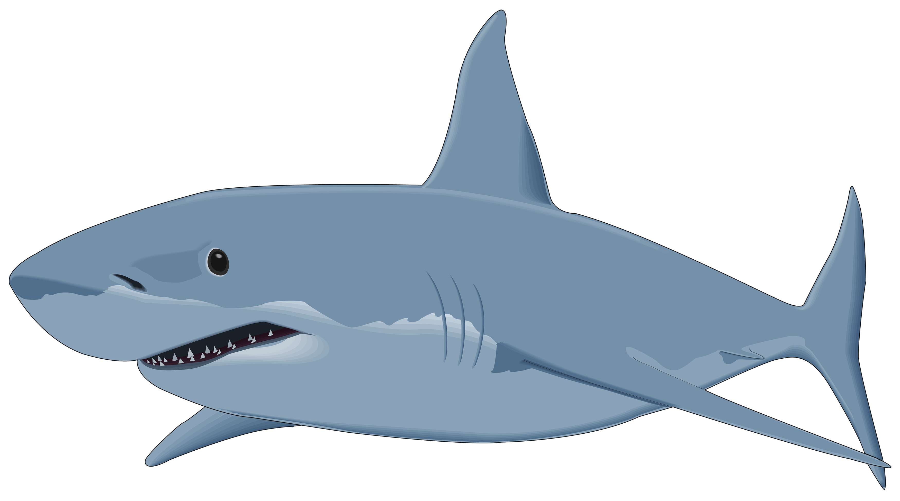 Shark clipart Download #1 drawings clipart clipart