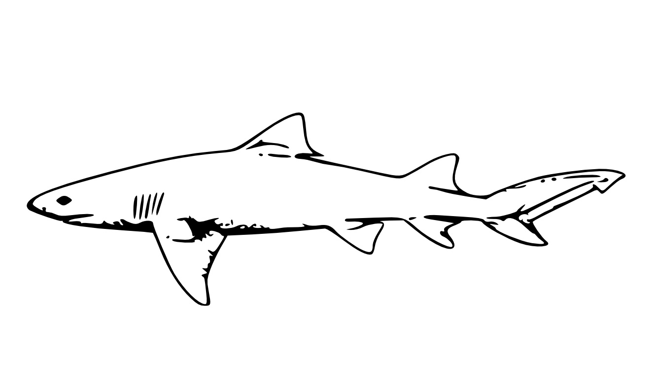 Tiger Shark clipart printable #4
