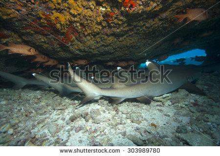 Shark clipart green #5