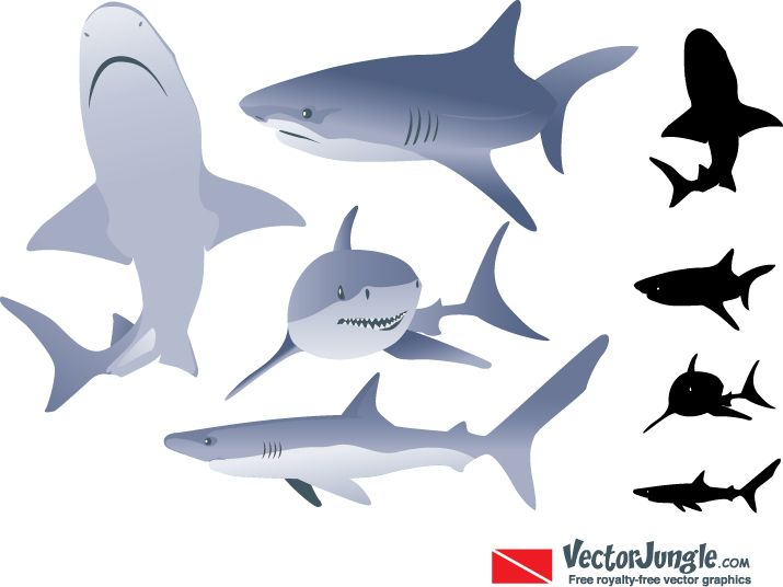 Shark clipart living thing #13