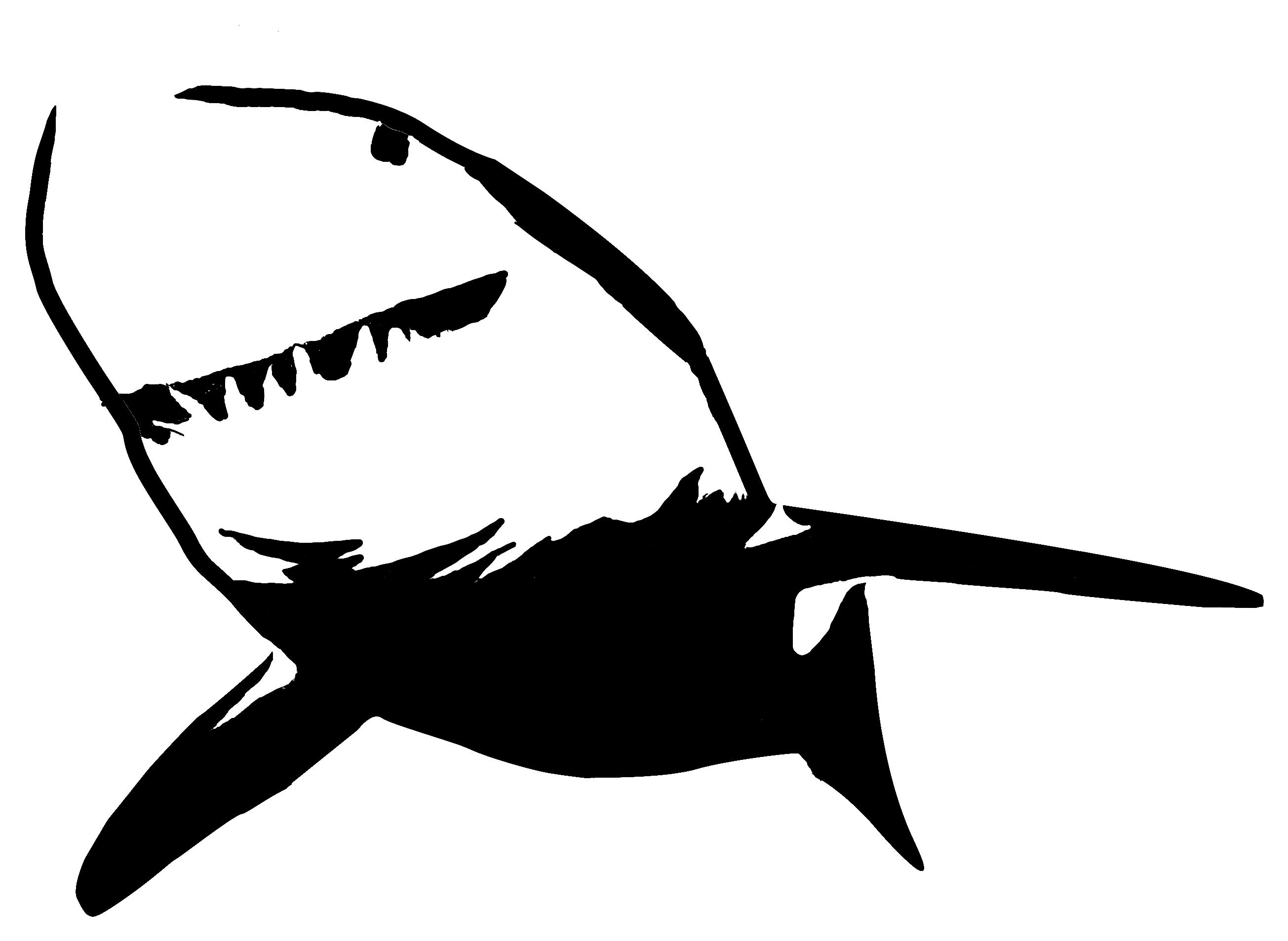 Bull Shark clipart stencil Hammerhead (57+) Clipart Free Shark