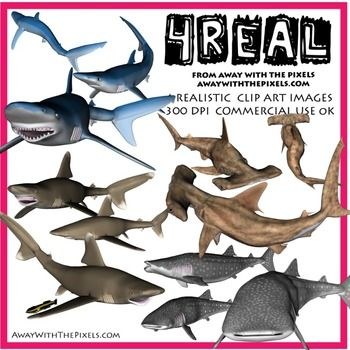 Shark clipart teacher #15