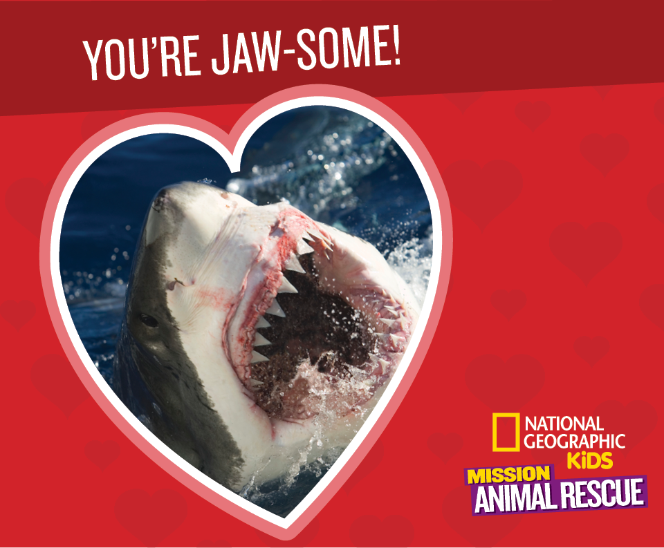 Shark clipart valentine #12
