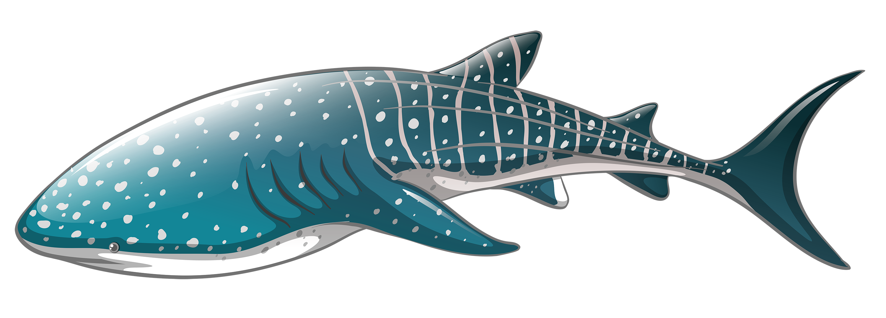 Sharkwhale clipart Clipart Clipart PNG PNG WEB