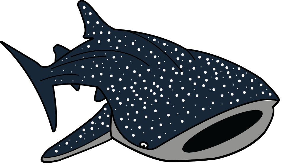 Whale Shark clipart LMSSeaSigns (SHKS) Course LMS –
