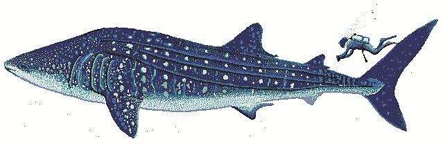 Whale Shark clipart Download Shark Clip 2 Art