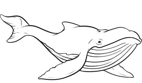 Sharkwhale clipart coloring #6