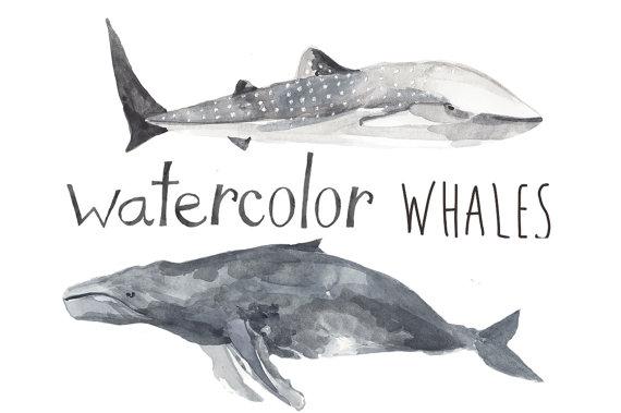 Blue Whale clipart beluga whale Whale Art Blue Whale Undersea