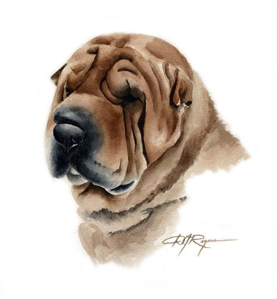 Shar Pei clipart Dog clipart about images on