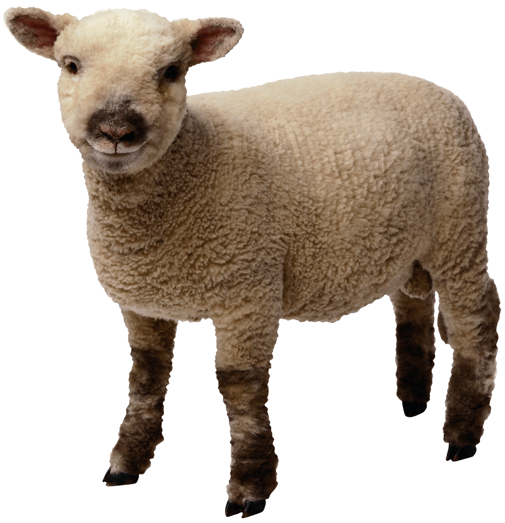 Sheep clipart mother and baby #6