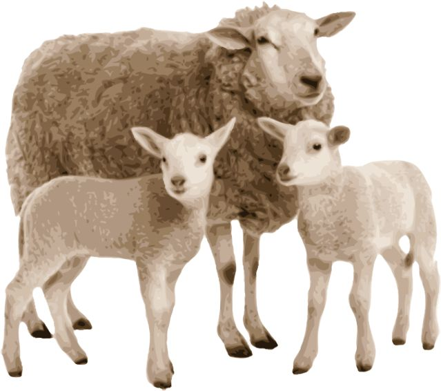 Sheep clipart mother and baby #5