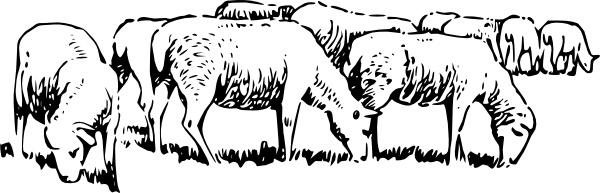 Sheep clipart sheep grazing #2