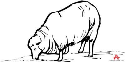 Sheep clipart sheep grazing #6