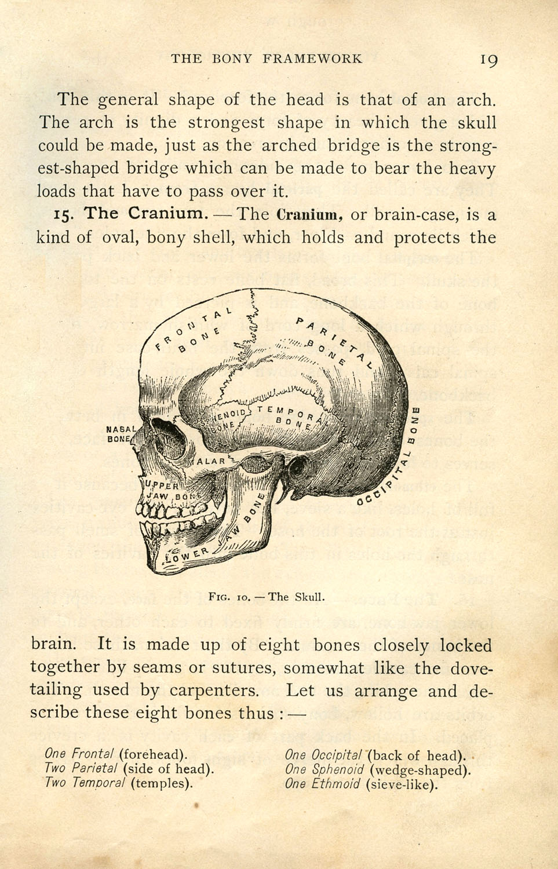 Anatomy clipart anatomical heart Vintage Art Skull Clip Halloween